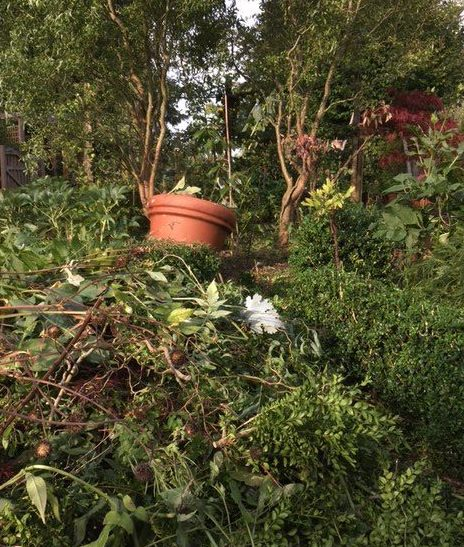 Border mid make-over with pile of cut vegetation waiting to be carried to the bonfire