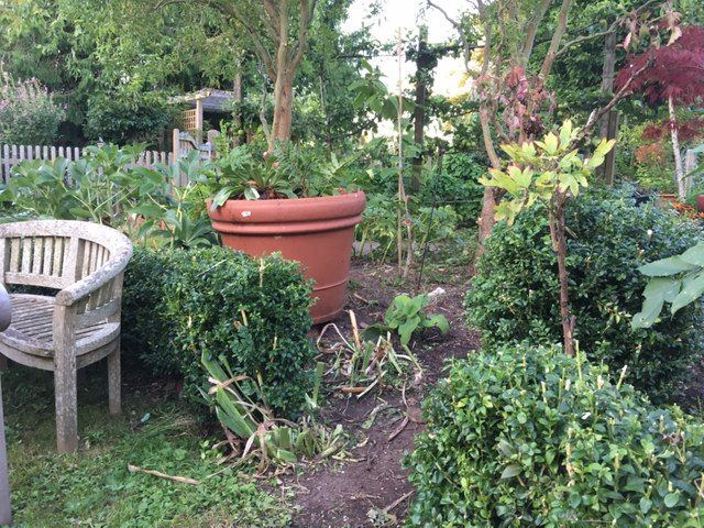 trimmed box hedges and a bit of bare earth a breath of fresh air after heavy covering with high summer border thugs